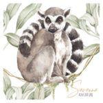 DEKO.NNM_lemur