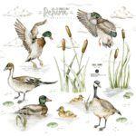 DEKO.N.NNM.085_S_L(ducks-on-the-lake)